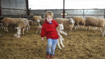 Practical Life|三岁小女孩在自家农场帮母羊接生